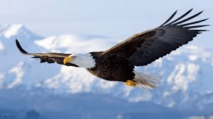 Ezekiel 17 – Who are the two Eagles?